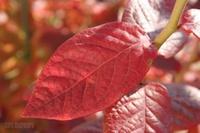 Autumnalleaves