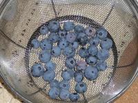 Blueberry2008