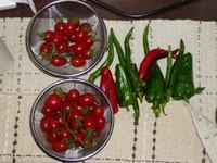 Tomato100717