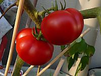 Tomato130629