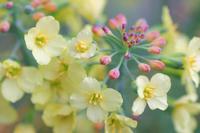Broflower